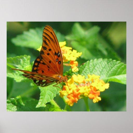 Serie de la mariposa póster