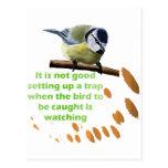 Serie de la trampa del pájaro postal