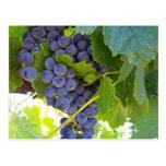 Serie de las uvas de Napa Postal