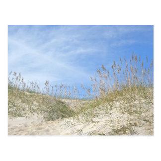 Serie de Outer Banks NC de la avena del mar Postales