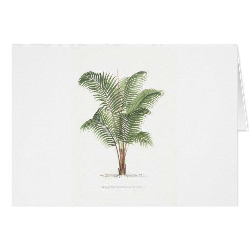 Serie del ejemplo de la palma - placa 25 tarjeta de felicitación