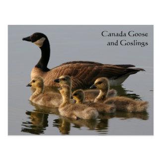 Serie del ganso de Canadá y de la fauna de los ans Postal