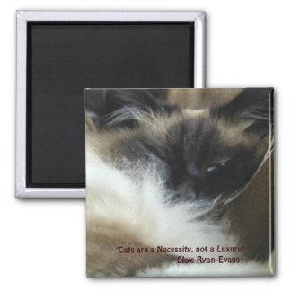Serie del imán del CAT de BIRMAN RAGDOLL