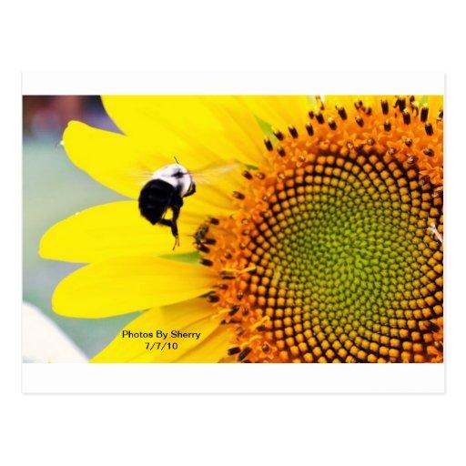 Serie del jardín de flores del jerez postales