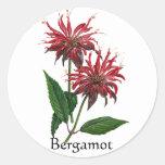 Serie del jardín de hierbas - bergamota pegatina redonda