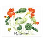 Serie del jardín de hierbas - capuchina tarjeta postal