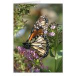 Serie del jardín de la mariposa felicitacion