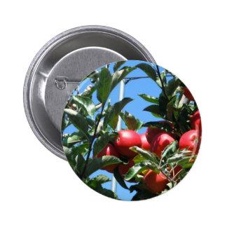 Serie del manzanar pin