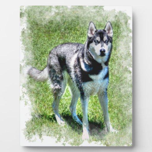 Serie del regalo del mascota de los Perro-amantes  Placas Con Foto