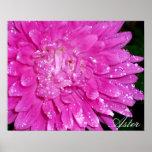 Serie floral:  Asteraceae Impresiones