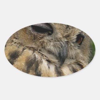 Serie grande del bubón del bubón del búho de pegatinas ovaladas