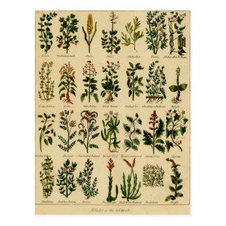 Serie herbaria de la postal del vintage - 2