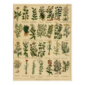Serie herbaria de la postal del vintage - 4