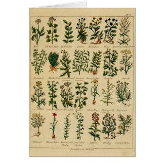 Serie herbaria de la postal del vintage - 4 tarjeta de felicitación