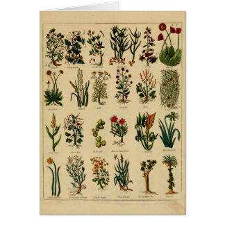 Serie herbaria de la tarjeta de felicitación del
