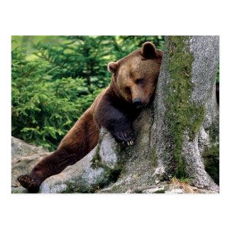 Serie relajante de la fauna del oso de Brown # pos Postales