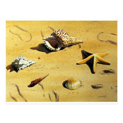 Serie VI de Shell del mar Tarjetas Postales