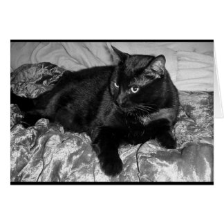 Serious Black Cat Greeting Card