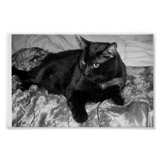Serious Black Cat Poster