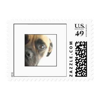 Serious Bullmastiff Dog Postage