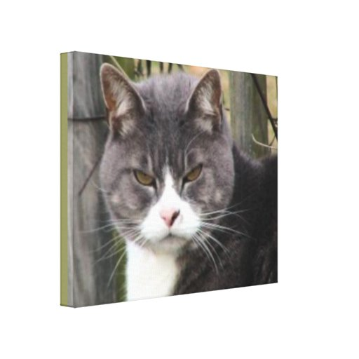 SERIOUS CAT PHOTO Wrapped Canvas Wall Art Canvas Prints