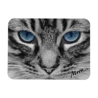 Serious Cat with Blue Eys Magnet