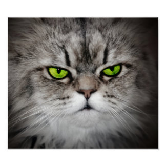 Serious cat with green eyes poster