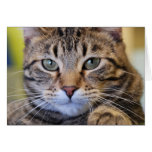 Serious Green-Eyed Tabby Cat Greeting Card