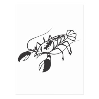 Serious Lobster in Black and White Postcard