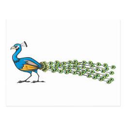 Serious Peacock Bird Postcard