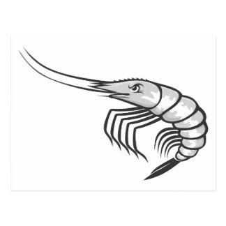 Serious Shrimp Postcard