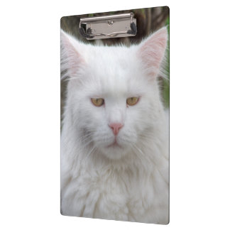 Serious White Cat Clipboard