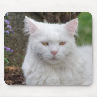 Serious White Cat Mouse Pad