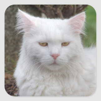Serious White Cat Square Sticker