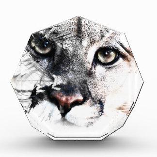 Seriously cougar animal art award