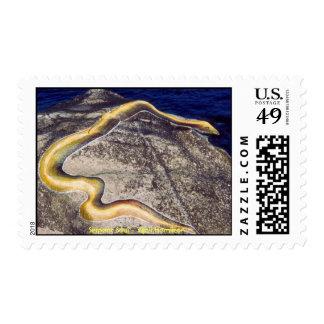 Serpent Soul/Stamp