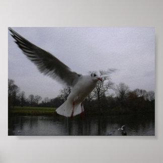 serpentine seagull poster