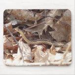 serpiente alfombrillas de raton