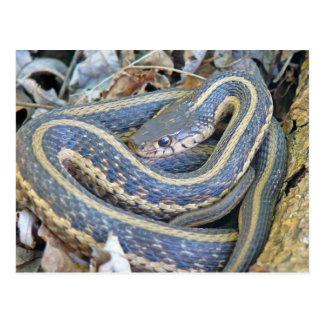Serpiente alineada postal