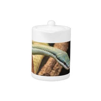 Serpiente blanca y amarilla verde