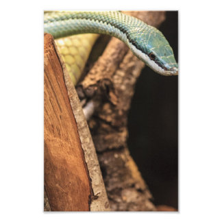 Serpiente blanca y amarilla verde fotografías