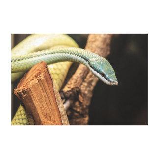 Serpiente blanca y amarilla verde impresión en lienzo