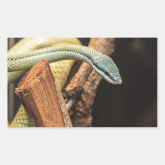 Serpiente blanca y amarilla verde rectangular pegatinas