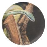 Serpiente blanca y amarilla verde platos de comidas