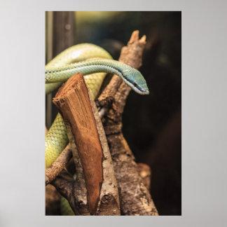 Serpiente blanca y amarilla verde póster