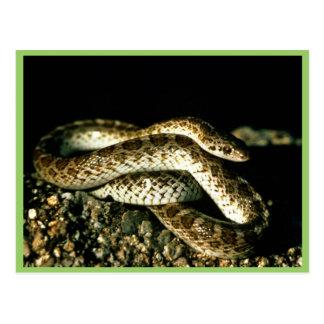 Serpiente brillante postal