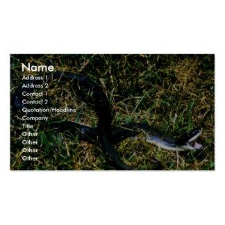 serpiente Cerdo-sospechada Tarjetas Personales