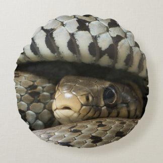 Serpiente Cojín Redondo