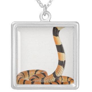 Serpiente coralina africana (lubricus del Aspidela Joyeria Personalizada