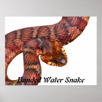 Serpiente de agua congregada impresiones